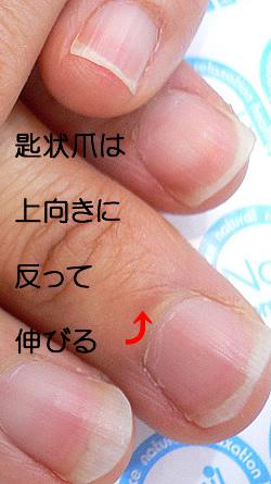 sazizyotsume-cut-2.jpg